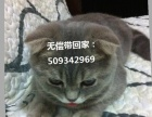 【无偿送】家养小折耳猫猫MM找新主人了