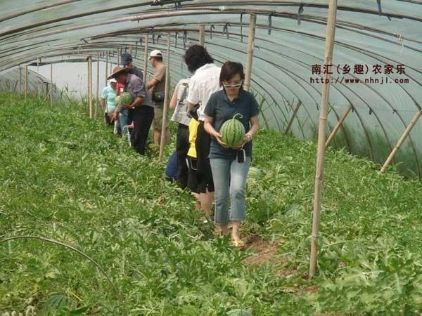 春季旅游去哪里 推荐上海农家乐一日游