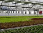 温室大棚大棚地锚埋设,蔬菜大棚设计建设