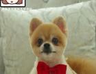 宠物美容师,宠物美容,山东宠物美容