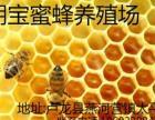 出售纯天然成熟蜂蜜