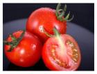 中山知名的蔬菜配送中心,价格实惠大众信赖