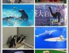成都做海狮表演的 企鹅展览 海洋生物展 美人鱼表演