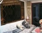 天龙国际大厦瓷砖美缝 地板打蜡 外墙清洗 家电 暖气清洗