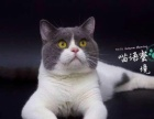 浩瀚名猫馆 CFA猫舍 家庭繁殖 包健康