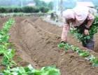 谁知道北京金辉颗源红薯苗种子公司怎么样
