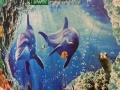 【艾丽威尔硅藻泥】加盟官网/加盟费用/装饰装修项目