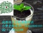 成都哪里有盆栽奶茶技术培训