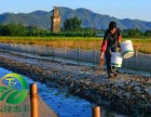 青蛙养殖加盟选择湖北天泽惠丰生态农业发展有限公司怎么样?