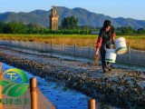 青蛙养殖加盟选择湖北天泽惠丰生态农业发展有限公司怎么样