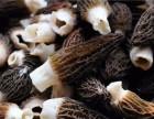 羊肚菌多少钱一斤,羊肚菌市场价格