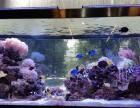 共享鱼缸设备与鱼