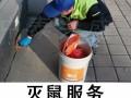 北京杀虫公司 除虫公司 专业杀蟑螂灭鼠服务 保证质量