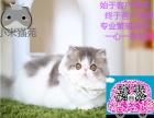 小米猫苑精品加菲猫多只在售 签协议包健康CFA猫舍专业繁殖