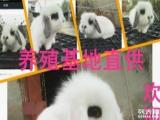 徐州兔场超低价直销:垂耳兔,凤眼兔,侏儒兔,道奇