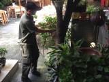 重庆家庭灭蚊子,长寿灭蟑螂公司