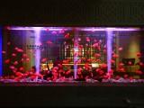 极致高端鱼缸定制观赏鱼搭配鱼缸设计