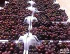 邢台威县出售巨峰葡萄优质巨峰葡萄