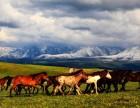 6月新疆 草原骑马 沙漠看日落 赛里木环湖 游薰衣草花海