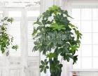 假椰子树假山仿真发财树仿真滴水观音植物墙承接绿化
