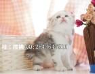重庆在哪里买纯种健康宠物猫 重庆那里有卖折耳猫幼崽