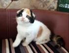 重庆哪里有最正规最大的宠物店,我想养只折耳猫