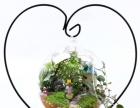 南宁仿真花订制 软装搭配 生态微景观礼品设计制作