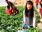 草莓采摘园,果蔬采摘园