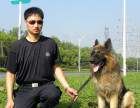 苏州宠物犬行为纠正训练培训学校训犬训狗基地哪家好