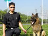 无锡宠物犬行为纠正训练培训学校训犬训狗基地