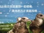?度假避暑在大连广鹿岛悦达假日宾馆
