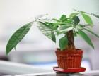 锦艺峰装饰告诉您植物这样摆才能让您财运转起来