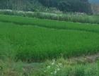 广西省桂林市56亩优质水田出租,土地肥沃