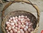 售卖老农土鸡蛋