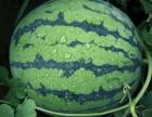 夏天来个大西瓜.