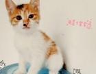 萌奶猫找爱心主人