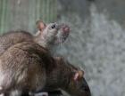灭老鼠、灭鼠、灭鼠公司灭蟑螂、杀蟑螂、灭蟑螂公司