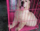 华仕狗场长期出售世界30多种名犬 华仕名犬繁殖中心