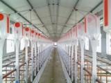 泊頭養豬設備良諸畜牧機械好