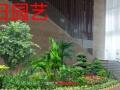 绿化养护.景观设计,花卉租摆,会议庆典,庭院绿化等