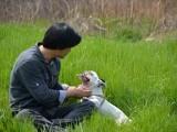 无锡哪里可以寄养狗狗宠物寄养