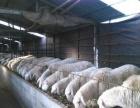 出租养殖场(以前养羊)
