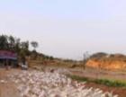 城北液化气站后面200米 土地 5000平米
