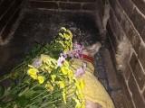 死去的狗狗 狗狗死了安葬