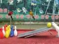 天水鹦鹉表演,海狮表演