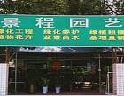 宁波植物租赁,盆景出租,绿化养护