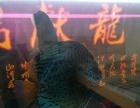 15公分七彩神仙鱼