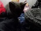 黑色辟邪的猫咪哟