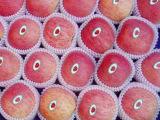 3c2||0批发苹果 陕西红富士苹果 新鲜红富士苹果 陕西苹果产