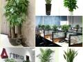 广州绿植租摆,办公室绿化,植物租赁,租绿植送鲜花